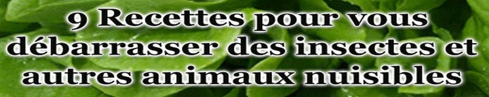 Souris - Mulot - Rat - Campagnol - Fourmi - Cloporte - Moustique - Guêpe - Puce - Tique- Limace - Punaise - Cafard -Araignée - Mite - Lépisme - Acarien - Lycte - Moucheron - Pou